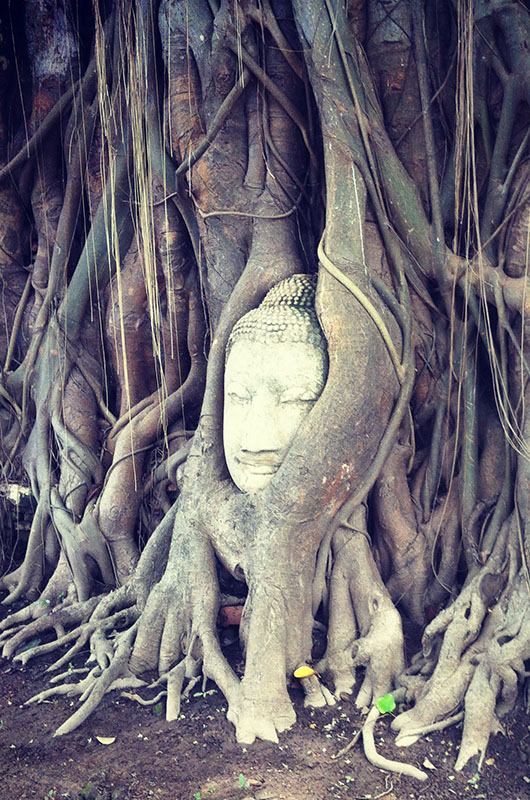 ayutthaya thailande temple bouddha