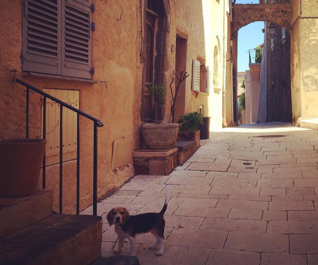 Gassin var village médiéval france cote d'azur chiot beagle